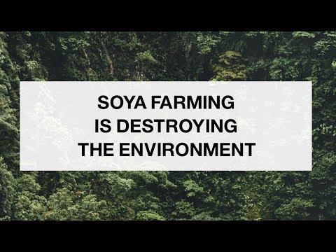 Soya Farming is Destroying the Environment