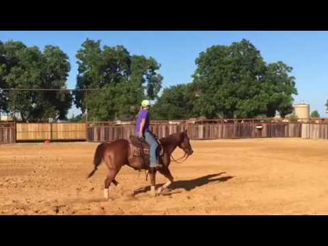 11 yo own son of High Brow Cat w/ $27,000 NCHA earnings!