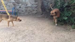 Собаки на детской площадке Ялты, на Дражинского