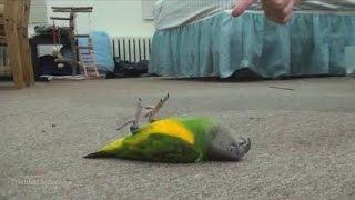 video zap animaux