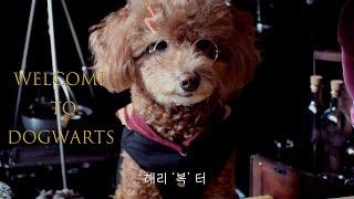 [해리포터 호그와트 마법약수업] DOGWARTS 강아지…