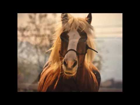 Artist Talk with TC Moore: Talking about horse hair art