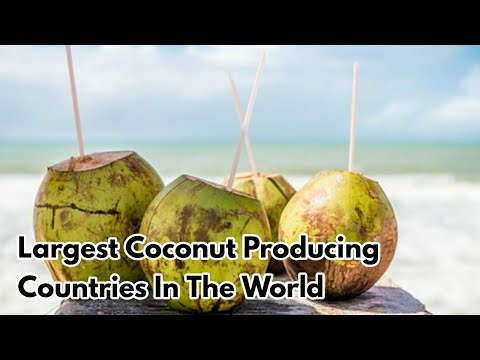 Top 10 Largest Coconut Producing Countries In The World