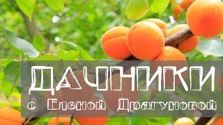 видео Описание сортов абрикоса