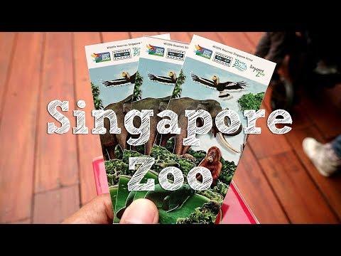 food-&-travel-||-1-day-trip-to-singapore-zoo---jalan-jalan-1-hari-di-singapore-zoo