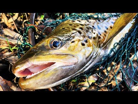 #4 Trout Fishing At Diamond Creek
