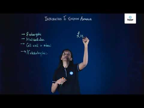 Phylum Chordata: Characteristics, Examples, Solved Questions