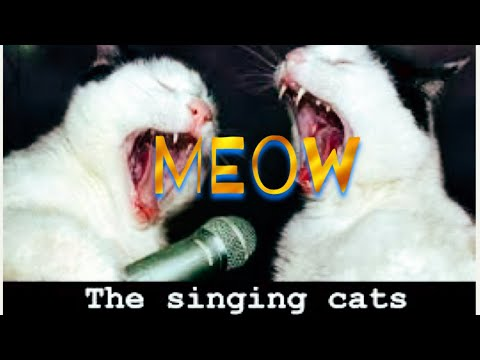 The Meow Song (Singing Cats)