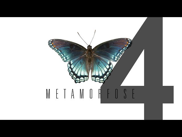 METAMORFOSE - 4 de 4 - Maturidade