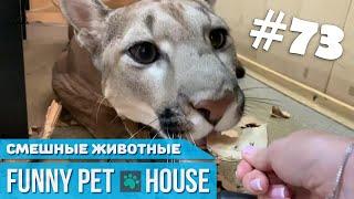 СМЕШНЫЕ ЖИВОТНЫЕ И ПИТОМЦЫ #73 ИЮЛЬ 2019 [Funny Pet House] Смешные животные