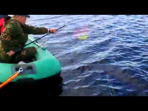 жванецкий о рыбалке