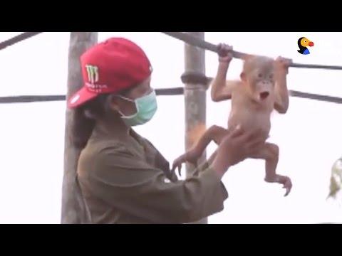 Orangutan Learns How To Climb After Losing Mom | The Dodo