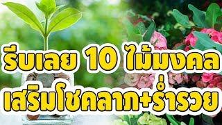 รีบปลูกเลย 10 ต้นไม้มงคล เสริมศิริมงคลให้กับครอบครัว โชคลาภ เงินทอง