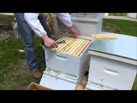 First Inspection of a New Hive