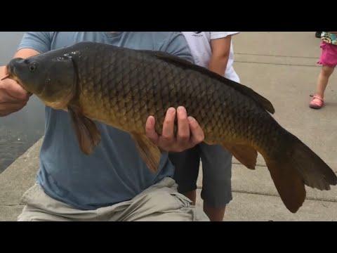 Lake Harriet ~ Fishing For Carp ~ Minneapolis Minnesota