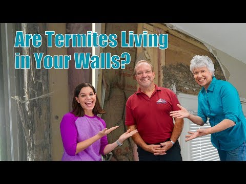 What's the difference in Termites vs. Winged Ants?