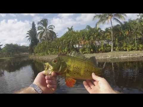 Peacock bass fishing Ft. Wrains_05 in Coral Springs Florida