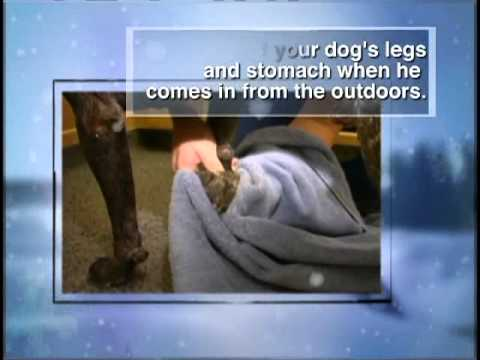 Winter Safety Pet Tips