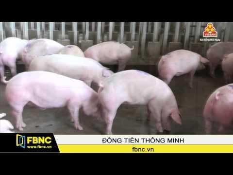 FBNC-Vệ sinh an toàn thực phẩm trong bối cảnh hội nhập (P2)