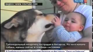 Трёхнедельный младенец пострадал в Ангарске. Дома на него напала собака породы «хаски»