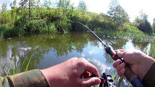 ВОЛШЕБНЫЙ ЗАЛИВ СКОЛЬКО же в нём РЫБЫ Рыбалка 2020 на всплеск летом