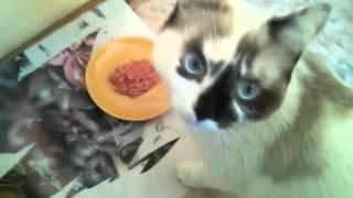 Готовим еду для кошки