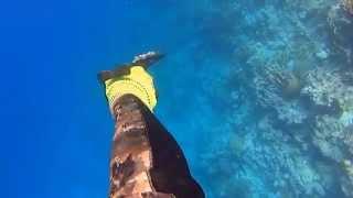 Spearfishing Jeddah By Abdulrzak