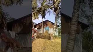 গ্রাম বাংলার ধান মাড়াই কল। Momin 01759303004