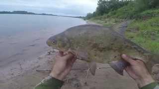 Ловля леща на течении с берега, видео rybachil.ru(Ловля леща летом. http://rybachil.ru/?p=1432., 2015-06-17T16:27:29.000Z)