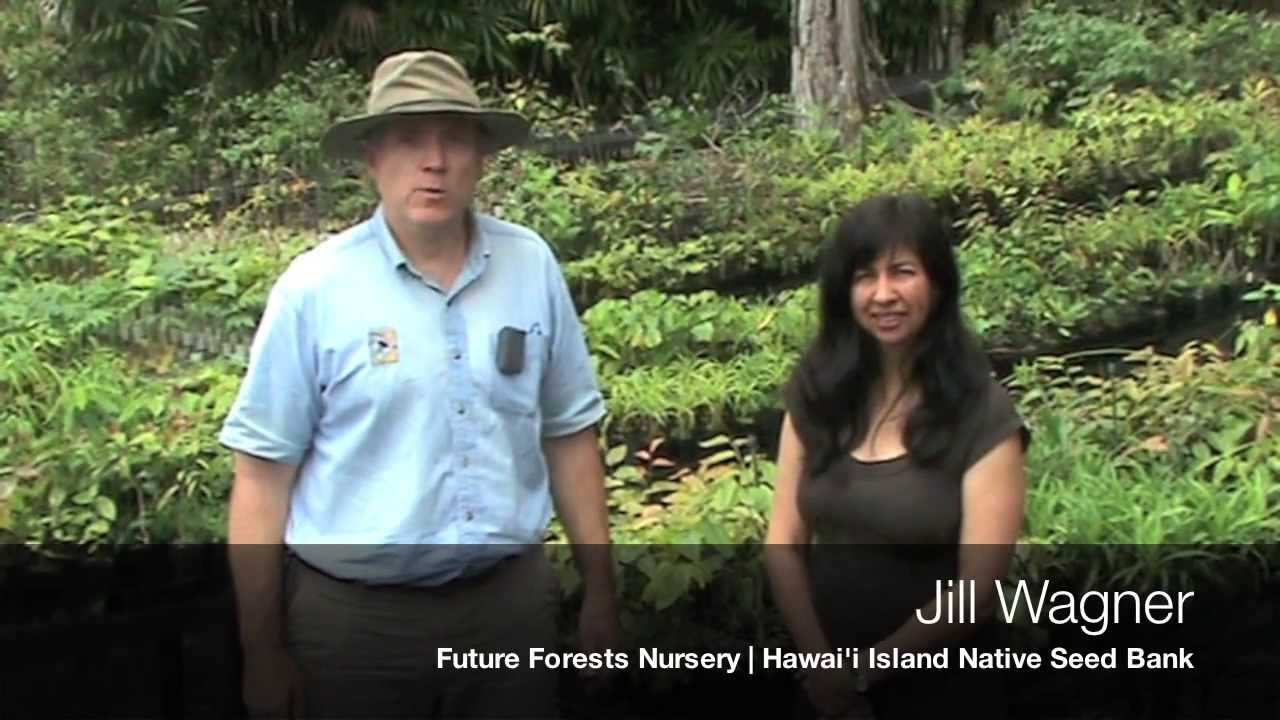 Native Forest Tree Seed: Collecting, Processing and ...