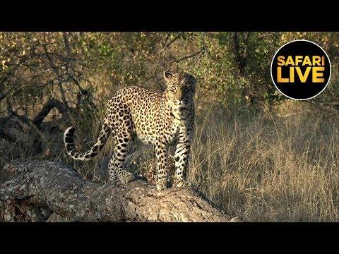 safariLIVE - Sunrise Safari - May 20, 2019