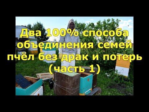 Как объединить две слабые пчелосемьи видео