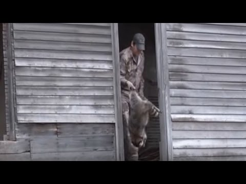 Daytime Raccoon Calling: Hunting Coons In Abandoned Houses Part 2