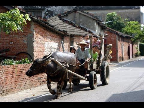 HD海伯之歌『牛犁歌』台灣早期農村生活影片 ▶3:17