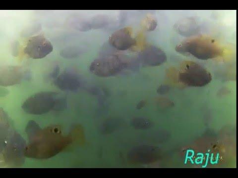 inside Ganga talao   *underwater