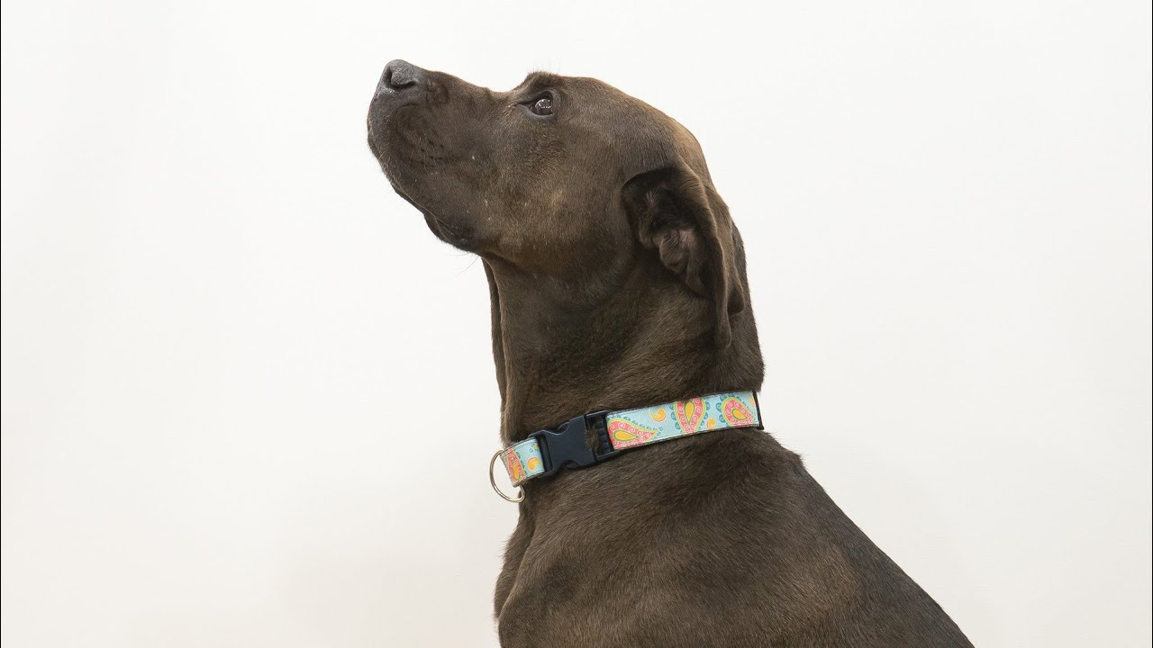 How to sew a dog collar youtube how to sew a dog collar jeuxipadfo Gallery