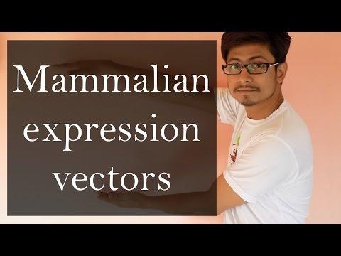 Mammalian Expression Vector