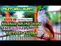 Burung Trucukan Gacor Paling Pas Untuk Pancingan Trucukan Masteran Susah Bunyi  Mp3 - Mp4 Download