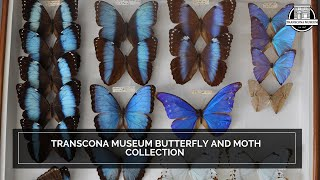 Transcona Museum Butterfly and Moth Collection