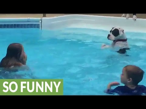 Dog mimics kids in pool, learns how to splash