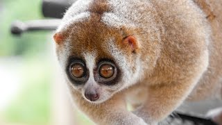 10 Cute Animals That Could Destroy You