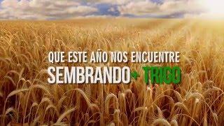 #CosechaCalidad | Trigo | Stoller | Produccion UNA Imagen Agropecuaria