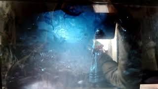 Чеширский котик из фильма Алиса в стране чудес