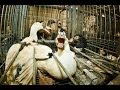 French Foie Gras Cruelty -  Animal Equality Undercover Investigation