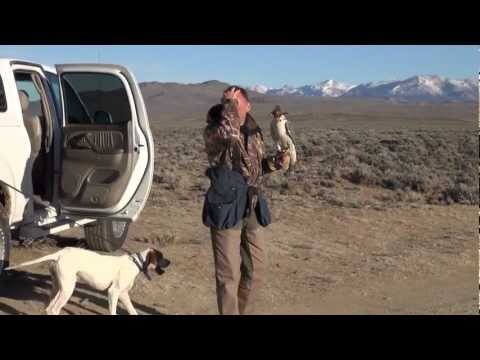 Falconry trip to Wyoming