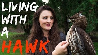 Living With a Red Tailed Hawk | Warning Graphic