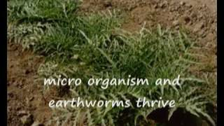 Homa Farming in South America (Hindi).wmv