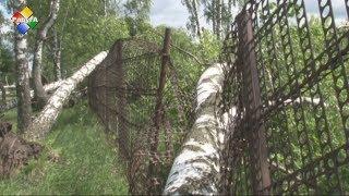 320 деревьев повалено ураганом в Павловском Посаде