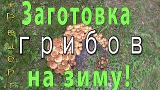 Заготовка грибов на зиму в собственном лесу