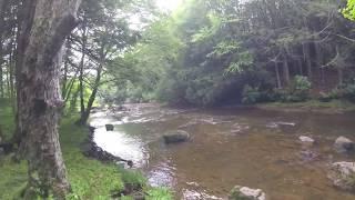Spruce Knob, WV Primitive Camping